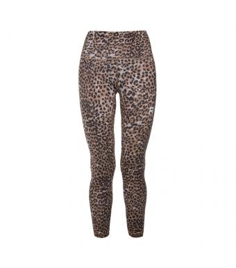 Ragdoll leopard
